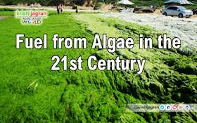 Fuel from Algae in the 21st Century