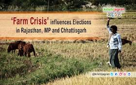 'Farm Crisis' influences Elections in Rajasthan, MP and Chhattisgarh