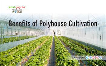 What are the Benefits of Polyhouse Cultivation