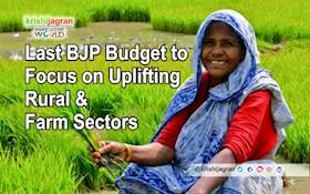 Last BJP Budget to Focus on Uplifting Rural & Farm Sectors