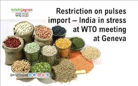 Restriction on pulses import – India in stress at WTO meeting at Geneva