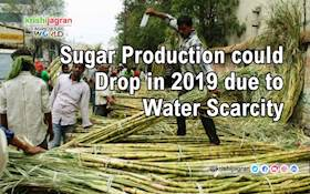 Sugar Production could Drop in 2019 due to Water Scarcity