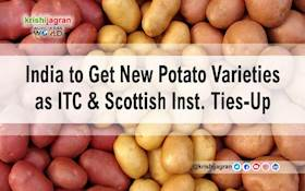 India to Get New Potato Varieties as ITC & Scottish Inst. Ties-Up