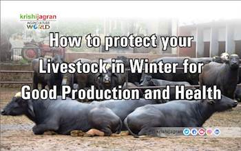How to protect your Livestock in Winter for Good Production and Health?