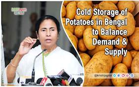 Cold Storage of Potatoes in Bengal to Balance Demand & Supply
