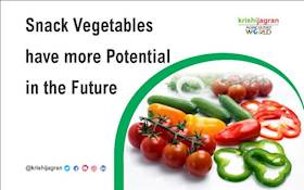 Snack Vegetables have more Potential in the Future