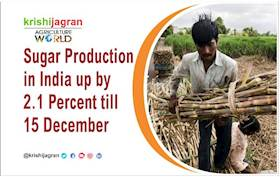 Sugar Production in India up by 2.1 Percent till 15 December
