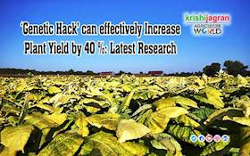 'Genetic Hack' can effectively Increase Plant Yield by 40 %: Latest Research
