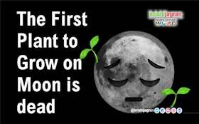 The First Plant to Grow on Moon is dead