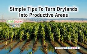 How to Turn Drylands into Productive Areas?
