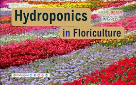Hydroponics in Floriculture