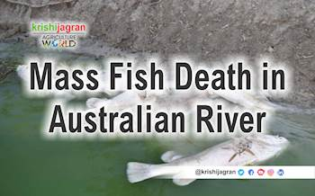 Why Thousands of Fish Are Dying in Australia?
