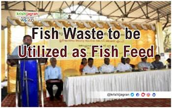 Fish Waste to be Utilized as Fish Feed