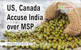 India Accused of 'Dramatic Under-reporting' of MSP for Five Pulses at WTO