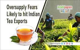 India's Tea Exports could Shrink due to Tough Competition from Kenya