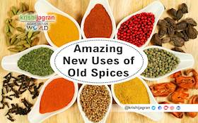 New from the Old:  Know how to Use your Old Spices!