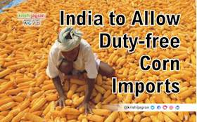Pests, Low Rainfall could Compel India to Grant Duty-free Corn Imports