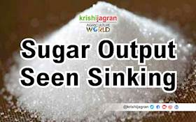 India's Sugar Production Likely to Drop to 3-year Low Next Season