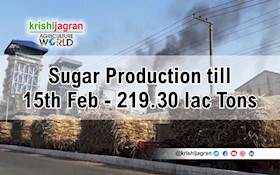 219.30 lac Tons of Sugar Produced by 507 Mills till 15th February