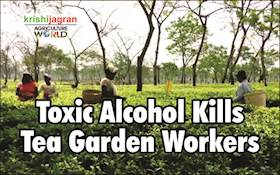 Beware! Many Tea Garden Workers Died After Consuming Toxic Liquor