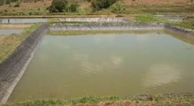 Pond Preparation for Freshwater Fish Farming