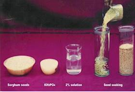 Seed Hardening: A Tool For Successful Crop Production In Drylands