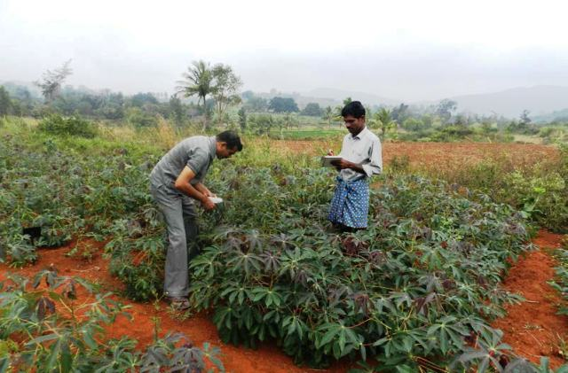 Integrated technologies in Hill Cassava Farming: Impact on
