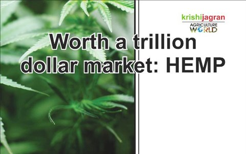 Worth a trillion dollar market: HEMP