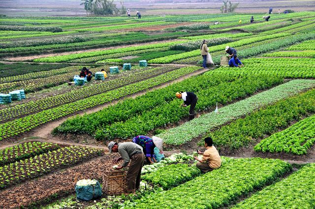 Image result for The Agriculture Business