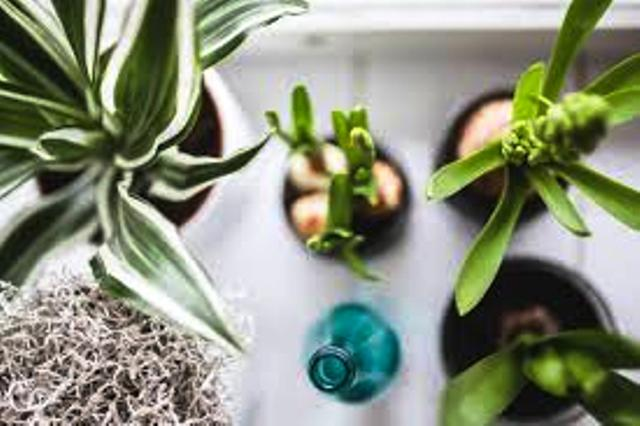 10 Indoor plants that will bring positive energy in your home