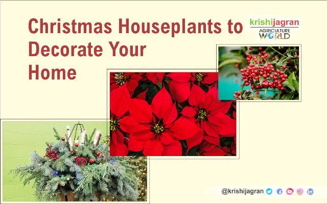 Best Winter Houseplants Jpg