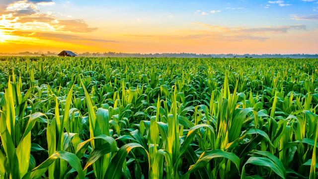 Elements of Agriculture Export Policy with Vision of New