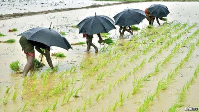 rainfed agriculture