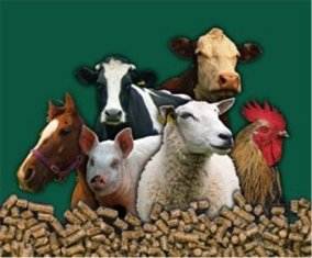 Cattle Feed Companies