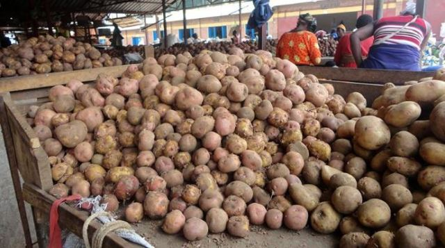 Special Arrangements Made for Farmers to Sell Surplus Potatoes