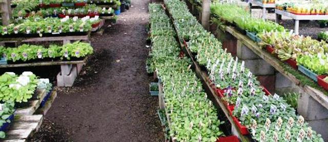 Recent Advances in Hi-Tech Vegetable Nursery Production
