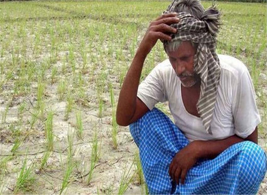 report on farmer suicide