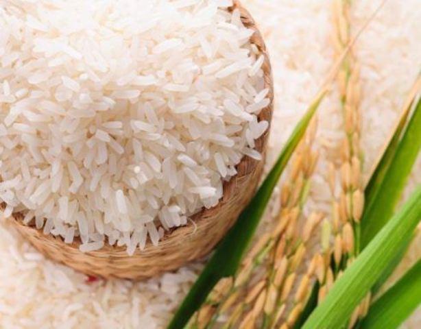 rice variety