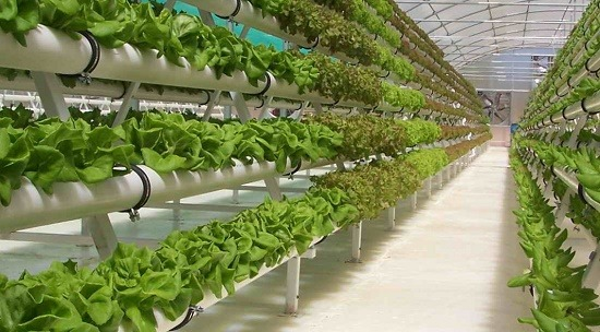 How to get subsidy for Hydroponics?