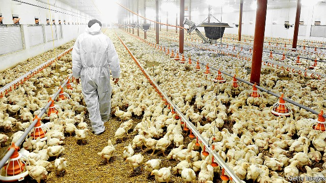Centre Releases Draft Rules for Better Poultry Farming Practices
