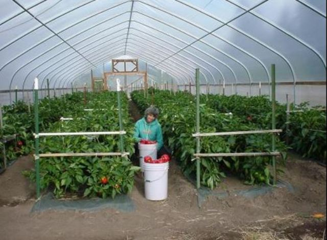 Off Season Vegetable Production