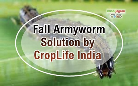 Crop Life India's solution for Fall Armyworm through Integrated Pest management