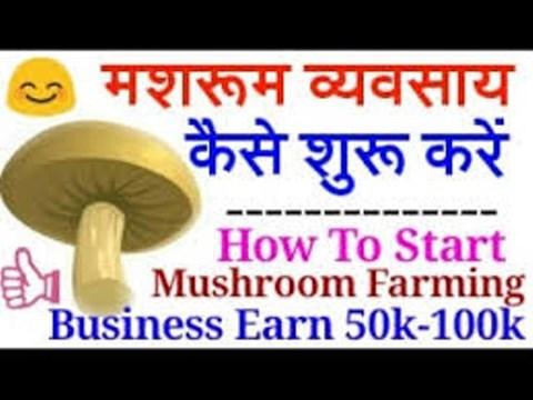 How to Start Mushroom Farming Business?