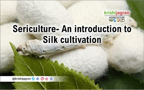 Sericulture- An introduction to Silk cultivation and production in India along with its policy initiatives