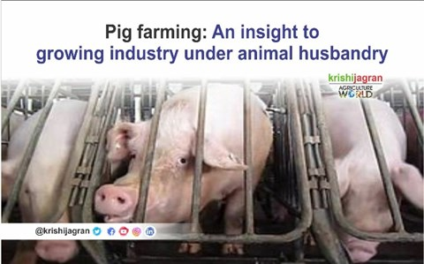 Pig farming: An insight to details and laws of  industry under animal husbandry