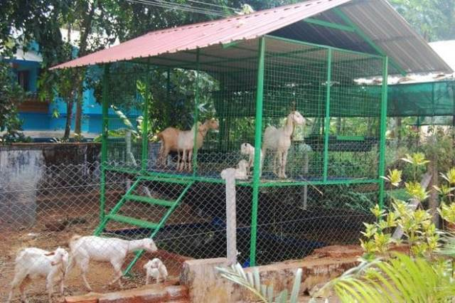Want to Become a Successful Goat Farmer? Here are the Excellent Tips