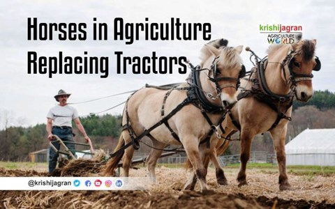 Horses in Agriculture Replacing Tractors and Early Domestication
