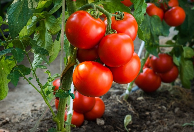 organic-horticulture