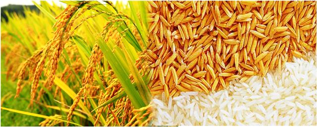 Rice Wheat