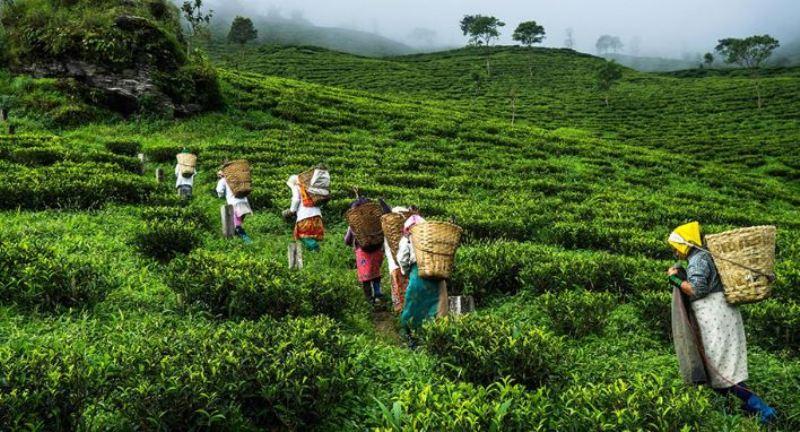 Tea output